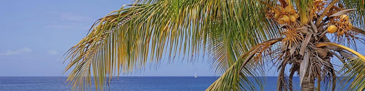 Annuaire palmier mer 1280