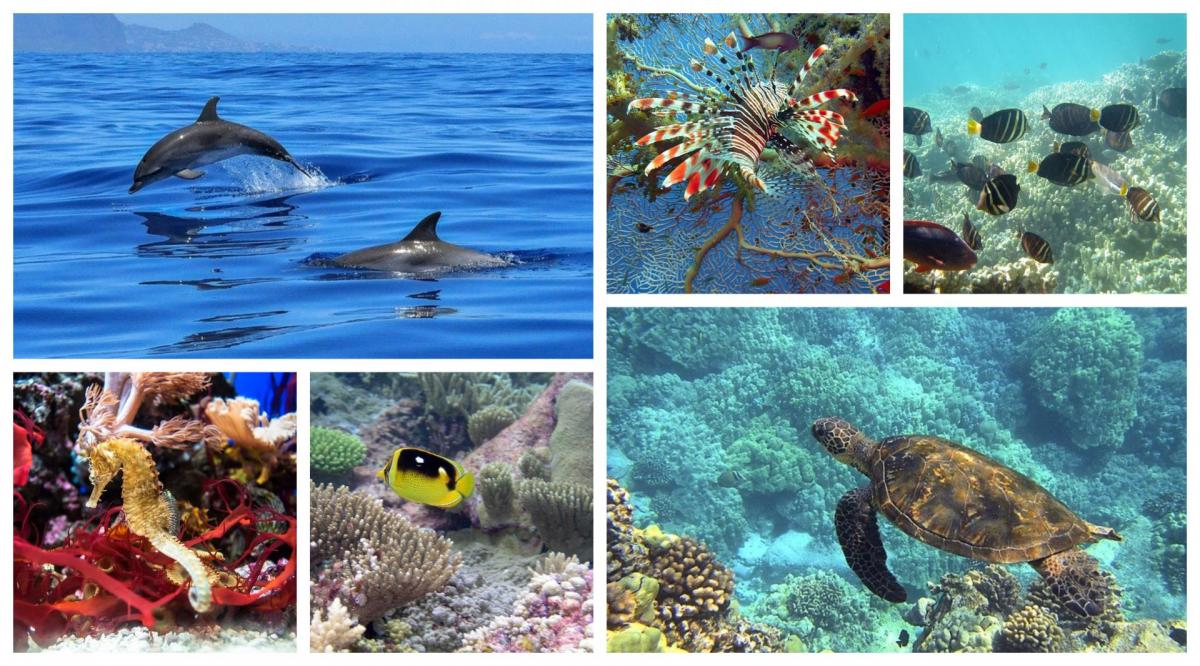 Faune aquatique de Martinique