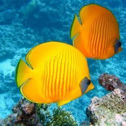 Le Parc aquatique Les jardins de la mer à Saint-Anne en Martinique