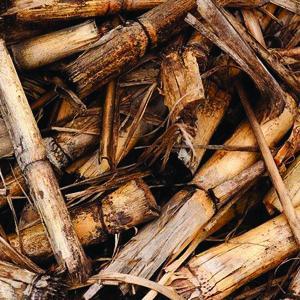 Fete de la fin de la recolte canne a sucre 300x300
