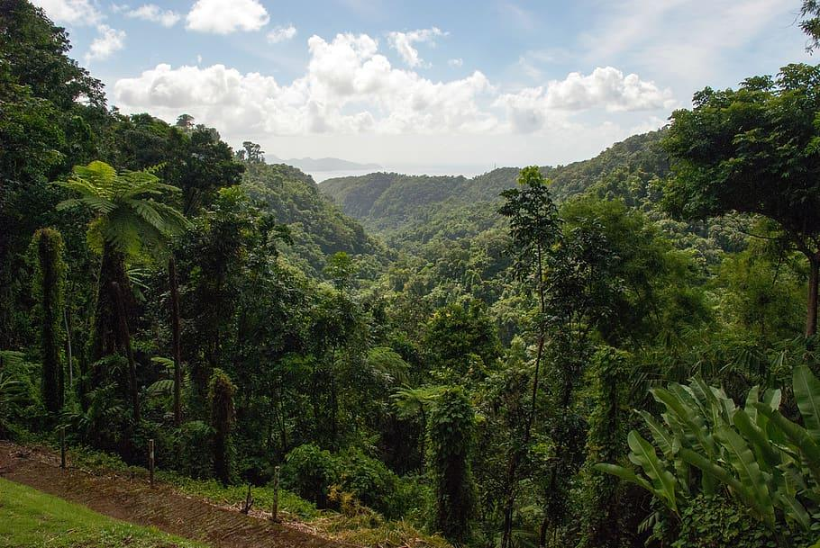 Martinique forêt tropicale