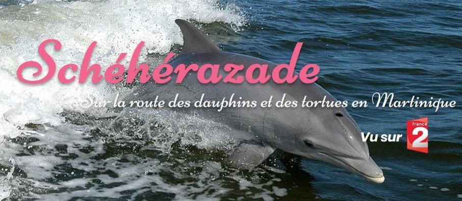 Schéhérazade excursion bateau dauphin Martinique